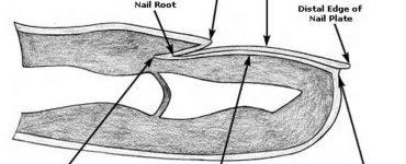 домашно лечение, гъбички по ноктите, лечение, гъбички, лечение на гъбички