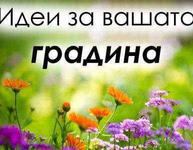 пролетни цветя за градината
