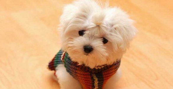малки породи кучета