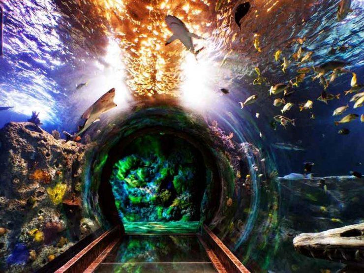 Най-големият аквариум