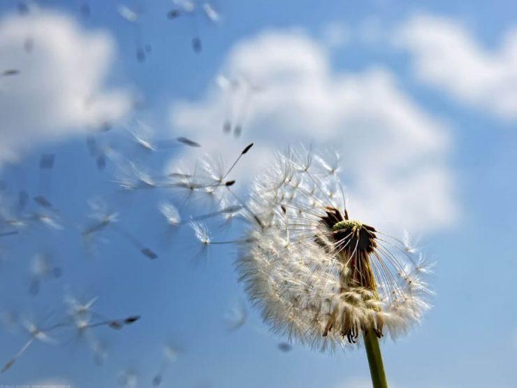 Пролетни алергии. Как да ги обликчим